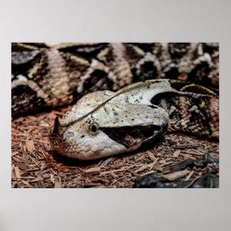 Gaboon Viper Snake Photo Poster