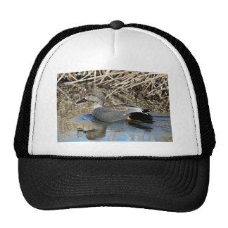 Gadwall Drake Hat