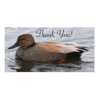 Gadwall Duck and Many Beautiful Shades of Brown Custom Photo Card