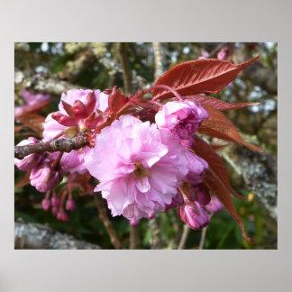 Gaeshi Cherry Blossom Poster