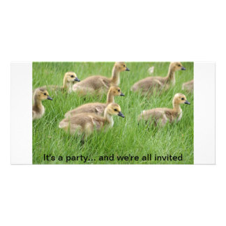 Gaggle of Baby Canada Geese or Goslings Custom Photo Card