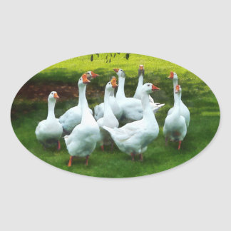 Gaggle of Geese Oval Sticker