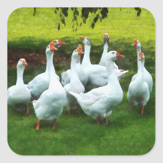 Gaggle of Geese Square Sticker