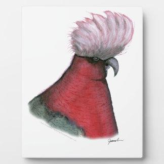 galah cockatoo, tony fernandes plaque