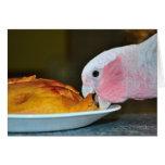 Galah Eating Pie Card
