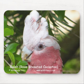 Galah (Rose Breasted Cockatoo) Mouse Pads