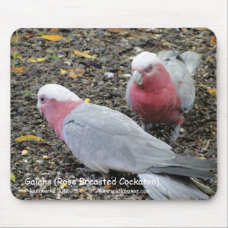 Galahs (Rose Breasted Cockatoo) Mouse Mat