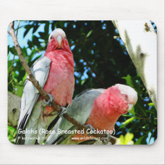 Galahs (Rose Breasted Cockatoo) Mousepads