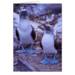 Galapagos Blue-Footed Birds Greeting Cards