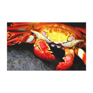 Galapagos Crab Canvas Prints