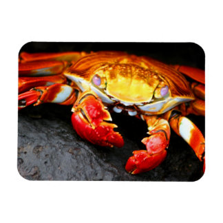 Galapagos Crab Rectangular Photo Magnet