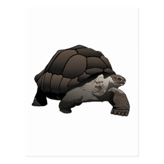 Galápagos/Galapagos Giant Tortoise Postcard