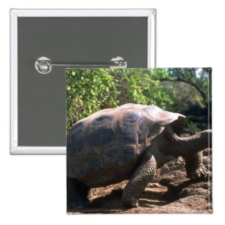 Galapagos Giant Tortoise (Dome-Shaped type) walkin Pinback Buttons