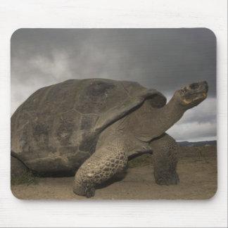 Galapagos Giant Tortoise Geochelone Mouse Mat
