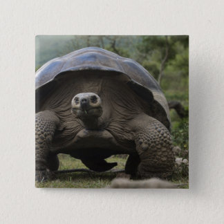 Galapagos Giant Tortoises Geochelone 15 Cm Square Badge