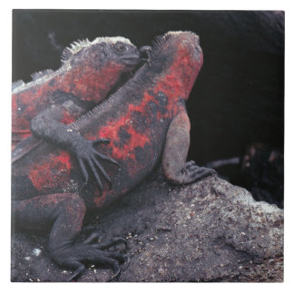 Galapagos iguana tile