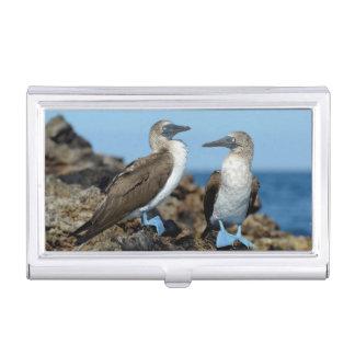 Galapagos Islands, Isabela Island Business Card Holder