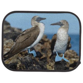Galapagos Islands, Isabela Island Car Mat