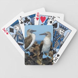 Galapagos Islands, Isabela Island Card Deck