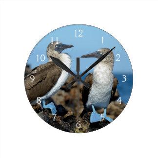 Galapagos Islands, Isabela Island Wall Clock