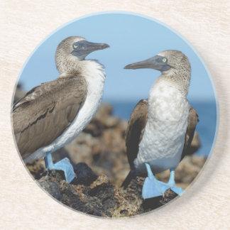 Galapagos Islands, Isabela Island Drink Coasters