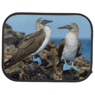 Galapagos Islands, Isabela Island Floor Mat