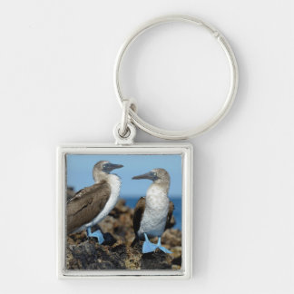 Galapagos Islands, Isabela Island Key Ring