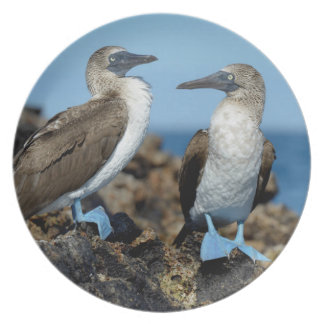 Galapagos Islands, Isabela Island Party Plates