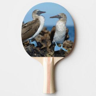 Galapagos Islands, Isabela Island Ping Pong Paddle