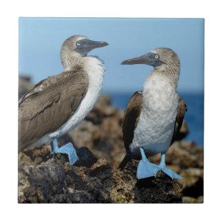 Galapagos Islands, Isabela Island Tile