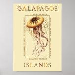 Galapagos Islands Jellyfish