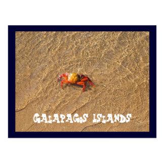 Galapagos Islands Postcard