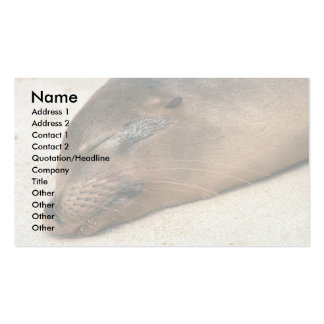 Galapagos Sea Lion Double-Sided Standard Business Cards (Pack Of 100)