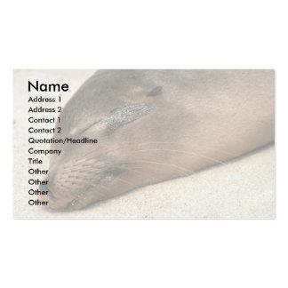 Galapagos Sea Lion Business Card Templates