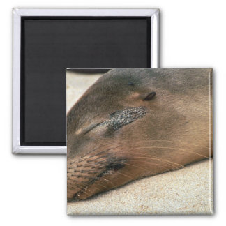 Galapagos Sea Lion Fridge Magnets