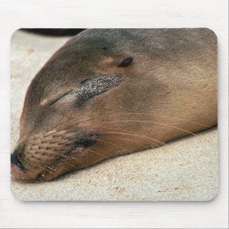 Galapagos Sea Lion Mousepad