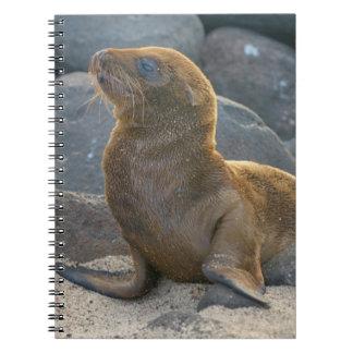 Galapagos sea lion notebook