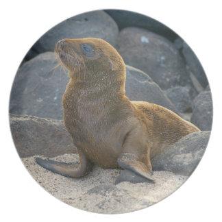 Galapagos sea lion plate