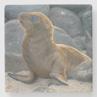 Galapagos sea lion stone coaster