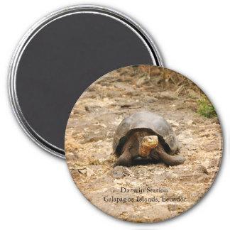 Galapagos Tortoise 7.5 Cm Round Magnet