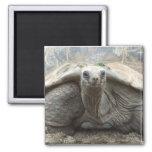 Galapagos Tortoise Magnet