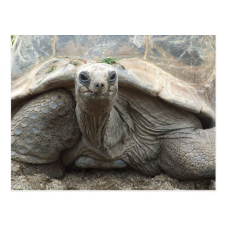 Galapagos Tortoise Postcard