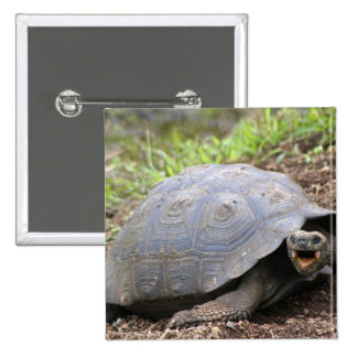 Galapagos Tortoise with mouth open 15 Cm Square Badge