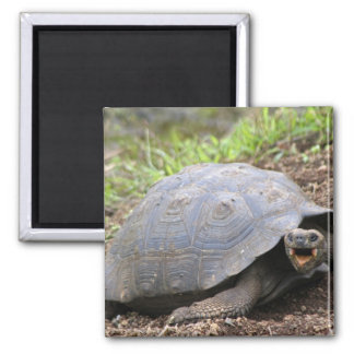 Galapagos Tortoise with mouth open Refrigerator Magnet