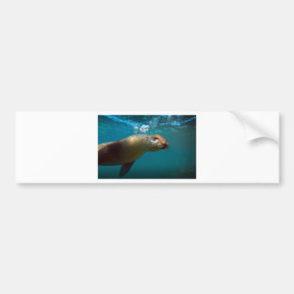 Galapagos underwater curious sea lion paradise bumper stickers