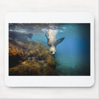 Galapagos underwater sea lion hang time mousepads