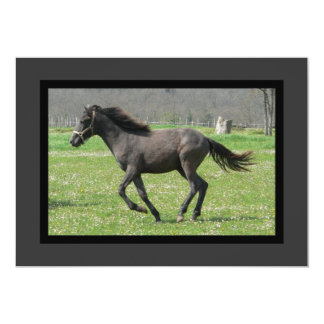 Galloping Black Colt on an Invitation