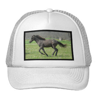 Galloping Colt Baseball Hat