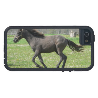 Galloping Colt iPhone 5 Case
