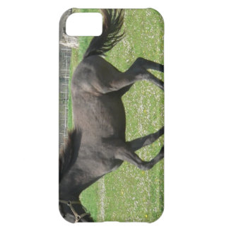 Galloping Colt iPhone 5C Covers